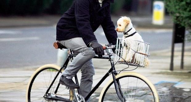 クロスバイクに前カゴは必要なのか【後付け・おすすめ】