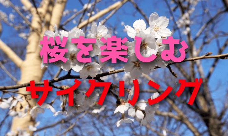 ロードバイクで満開の桜を楽しむサイクリング